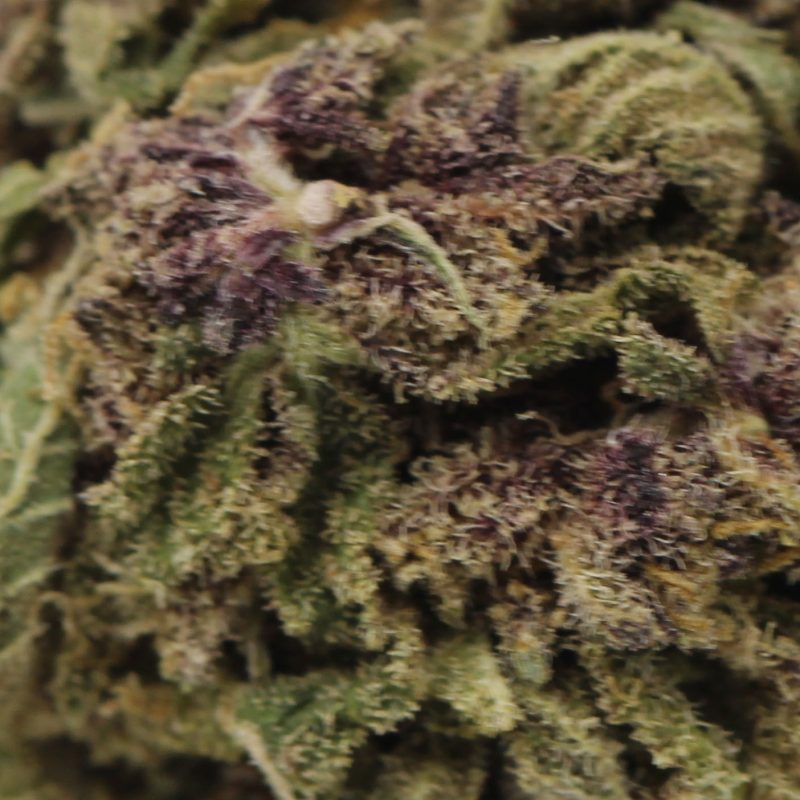 Purple Urkel CC (1)