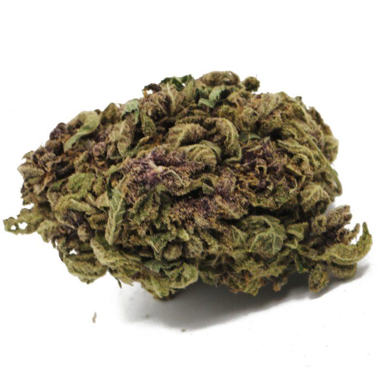 Purple Urkel CC (3)