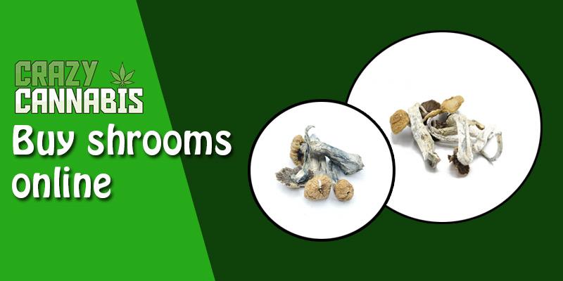 Buy shrooms online